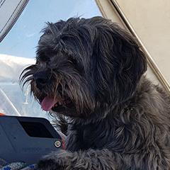 Moos (hond)